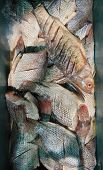 pic of fish  - Tilapia fish  - JPG