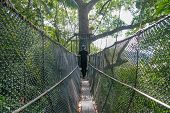 stock photo of canopy  - Resort guest walking on a canopy walk built between Tualang tree in Tuaran Sabah. Tualang is a strong tree and also known as the Mengaris tree. ** Note: Visible grain at 100%, best at smaller sizes - JPG