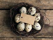 pic of bird egg  - Bird eggs in nest on wooden background - JPG