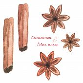 foto of cinnamon  - Watercolor cinnamon and star anise on the white background - JPG