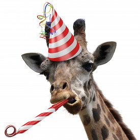 stock photo of birthday hat  - Funny giraffe party animal with a red and white striped birthday hat and noisemaker horn - JPG