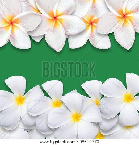 Frangipani Flower Isolated On Green Backgound