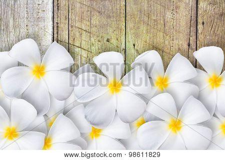Frangipani Flower  On Wood Floor