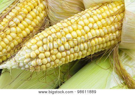 Partially Revealed Fresh Yellow Corn