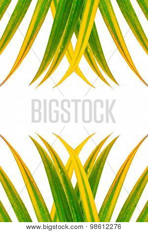 Leaves Of Palm Tree Isolated, Design For Background