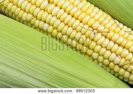 Fresh Yellow Corn Cobs Close Up