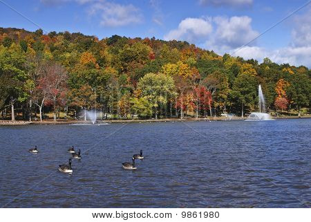 New england foliage with wildlife