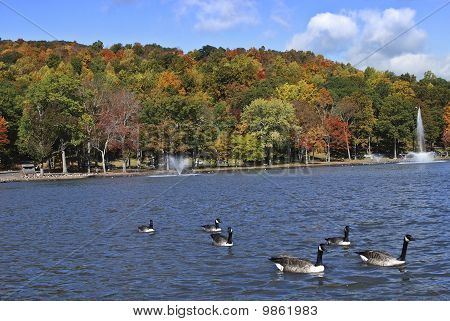 colorful autumn foliage and wildlife