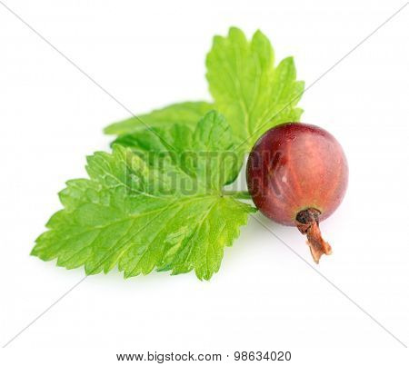 Fresh gooseberry with leaf isolated on white