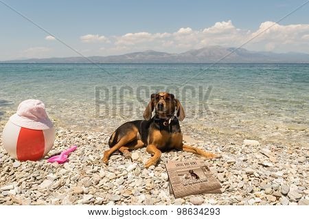 Dogs allowed on beach. A funny looking portrait with a dog wearing sunglasses reading the news.
