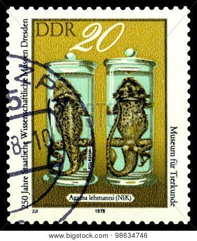 Vintage Postage Stamp.  Agama Lehmanni . Lizards.