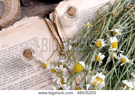 Old book with dry flowers close up