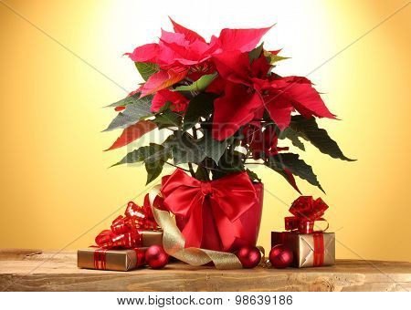beautiful poinsettia in flowerpot, gifts and Christmas balls on wooden table on yellow background