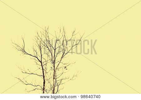 Abstract Death Tree On Yellow Background