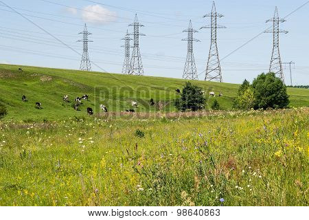 High-voltage Power Lines And The Cows In The Pasture