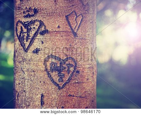 some carvings of hearts and initials of people in love on a tree in a park during sunset or sunrise on a hot summer day toned with a retro vintage instagram filter