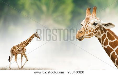 Giraffe Theme Background