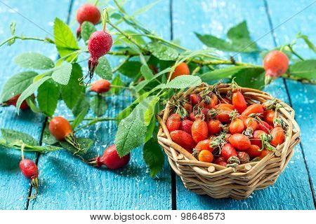 Twigs And Berries Hips - A Source Of Vitamin C