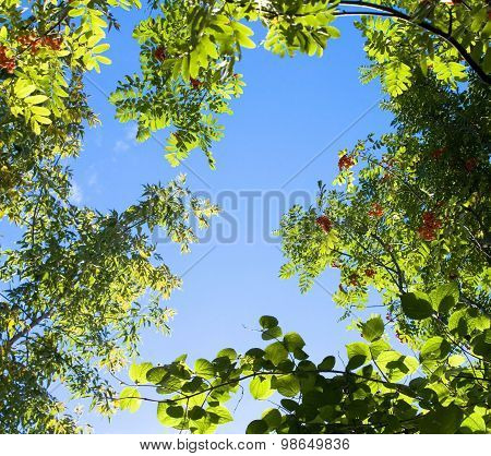 Trees branches on the blue sky
