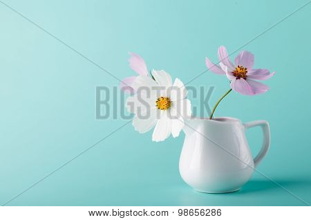 Cosmos Flower ?? Milk Jug On Aqua Color Background