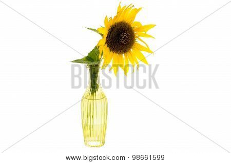 Bright Yellow Flower Of Sunflower In A Glass Vase Isolated