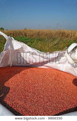 Giant Bag Of Weath Seeds