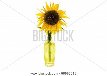 Bright Yellow Flower Of Sunflower In A Glass Vase Isolated Front View