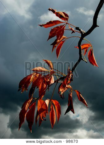 Leaves In A Storm