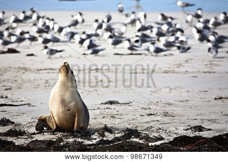 Sea lion resting on a beach