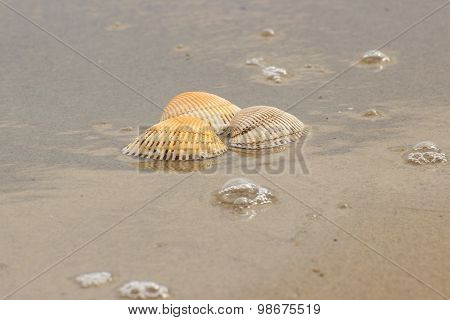 Seashells At The Beach By The Sea
