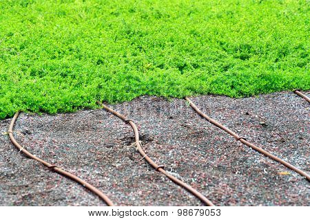 Irrigation Pipes On A Lawn Or Turf