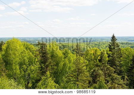 Endless Forests In Sunny Day