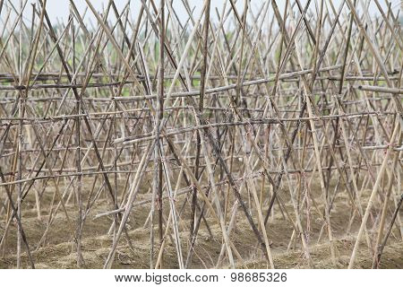 Bamboo scaffold on a garden, flower field.