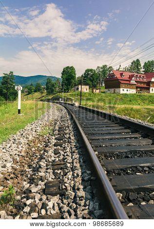 Railway Through A Village In Carpathians