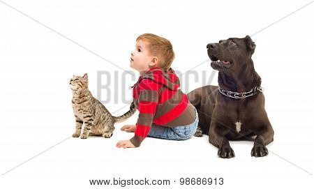 Curious child, dog and cat