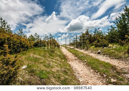 Mountain Dirt Road in a Pine Forest