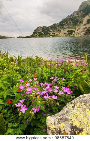 Pink Flowers Next to a Mountain Lake