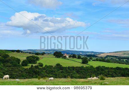 North York moors Yorkshire England.
