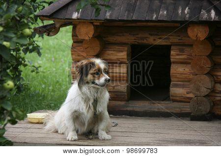 Dog Near Doghouse