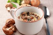 stock photo of agaricus  - Mushroom soup with field mushroom  - JPG