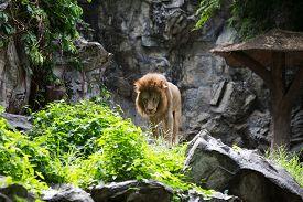 stock photo of zoo  - Zoo Chiangmai Thailand - JPG
