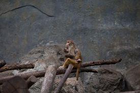 image of zoo  - Zoo Chiangmai Thailand - JPG