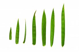 foto of bamboo leaves  - bamboo leaves isolated on white background clipping path included - JPG