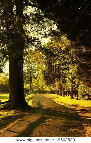 tree lined countryside roadway during golden hour