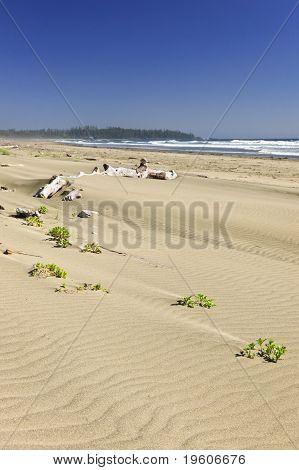 Sandy Beach On Pacific Ocean In Canada