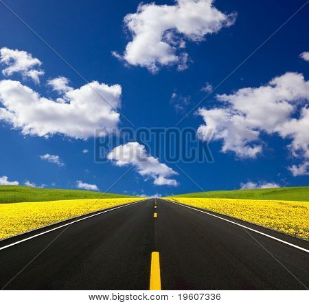 Road traveling through a Canola Field