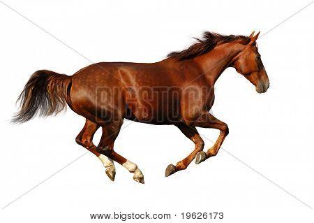 caballo alazán