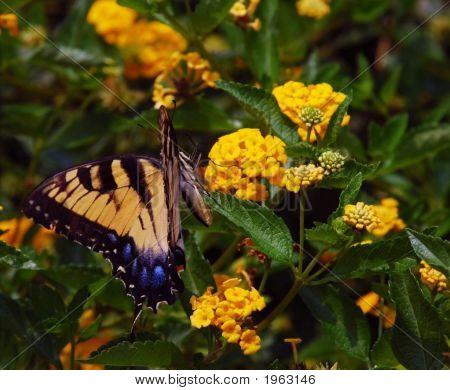 Butterfly On The Tilt