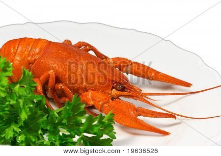 Closeup of crayfish on plate (isolated on white background with clipping path)