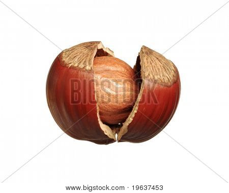 Closeup of cracked hazelnut - isolated on white background